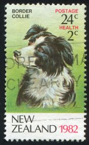 Border Collie auf Briefmarke in Neuseeland