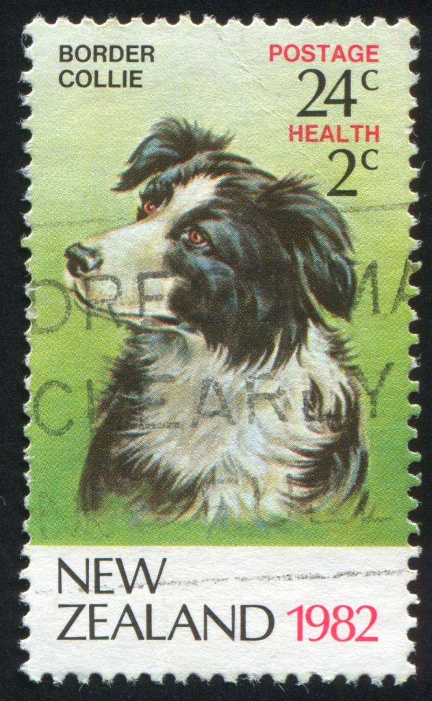 Border Collie auf Briefmarke in Neuseeland