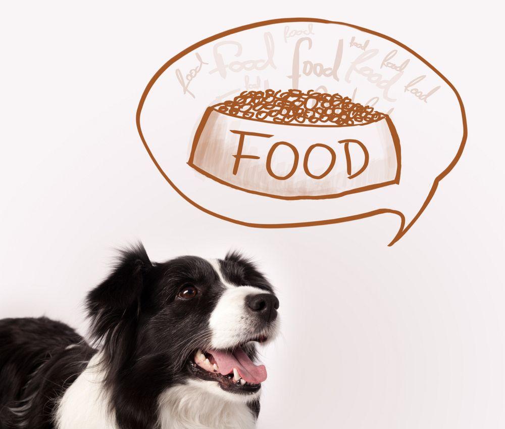 Border Collie Ernährung