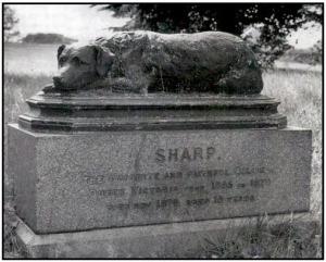 Denkmal Border Collie Sharp
