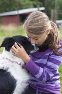 Border Collie als Therapiehund
