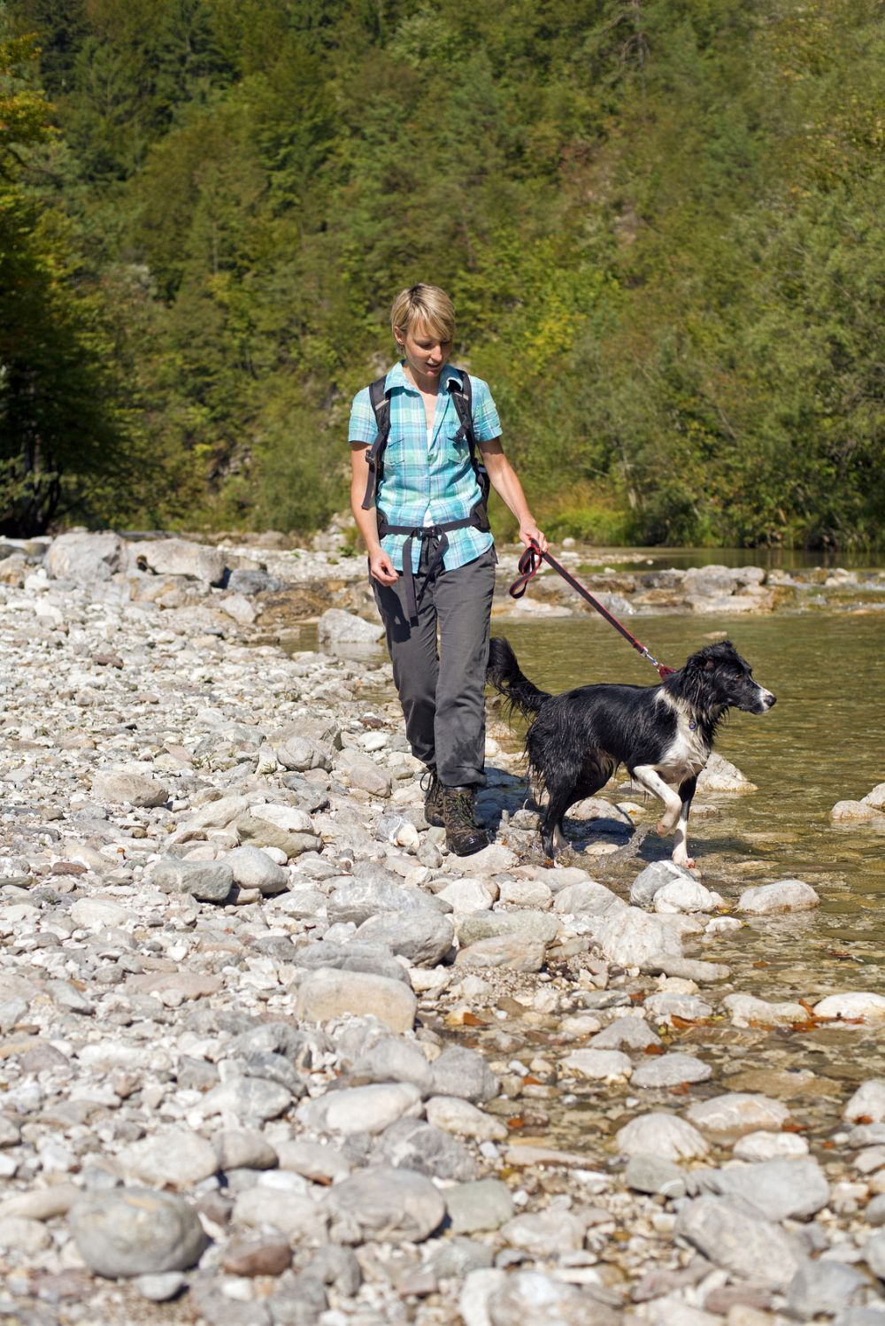 Border Collie in Not durch Scheidung