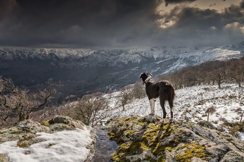 Urlaub in den Bergen mit dem Border Colllie