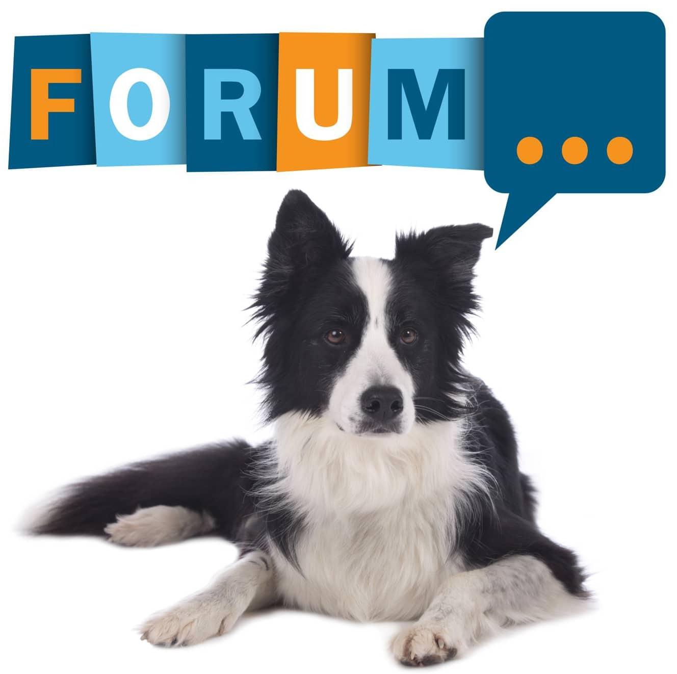 Border Collie Forum - Fragen und Antworten zum Border Collie